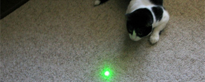 chat pointeur laser